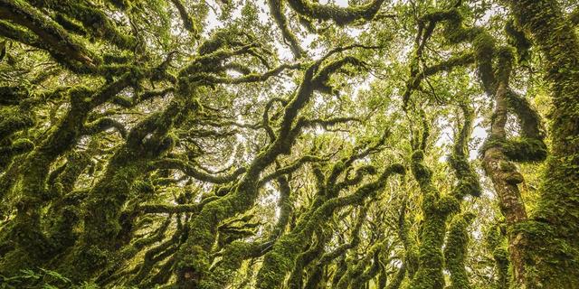 Goblin Ormanı