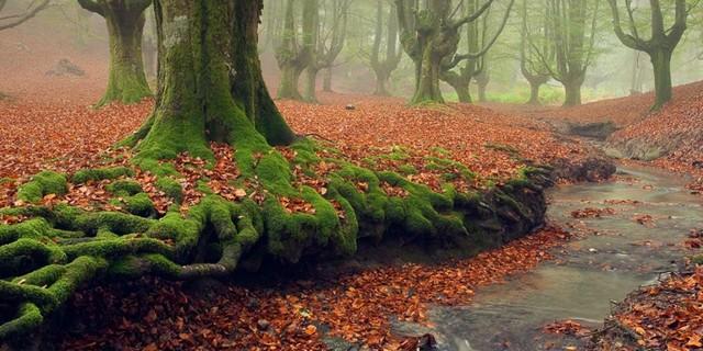 Otzaretta Ormanı
