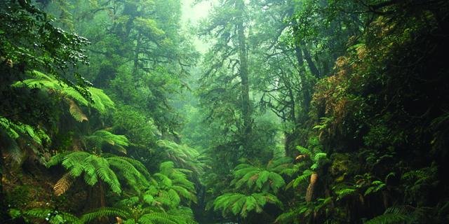 Tarkine Ormanı