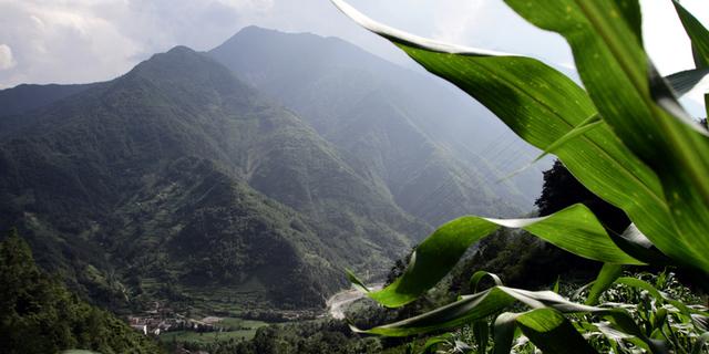 Güneybatı Çin'in Dağ Ormanları