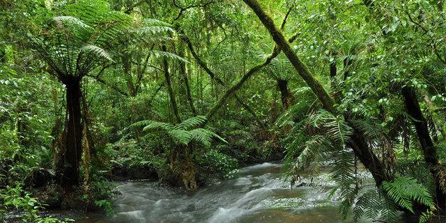 Güney Amerika'nın Atlantik Ormanı