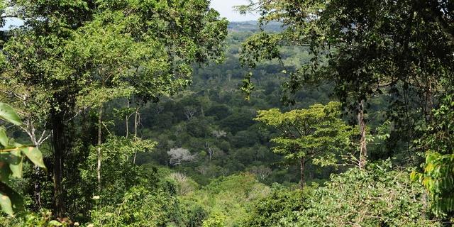 Güney Afrika Sahil Ormanları