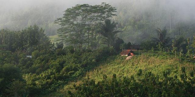 Indo-Burma Ormanı