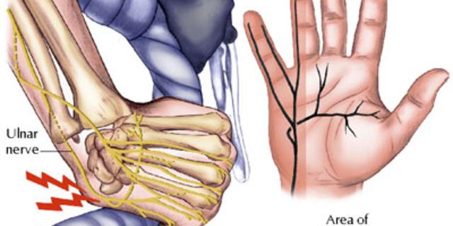 Biraz da anatomi…