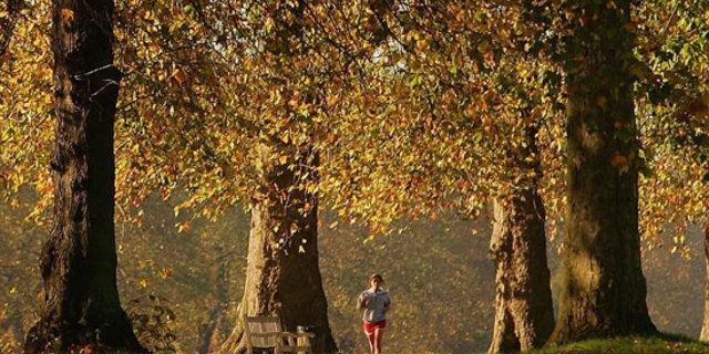 Ağaçlar altında koşmak gibisi var mı?