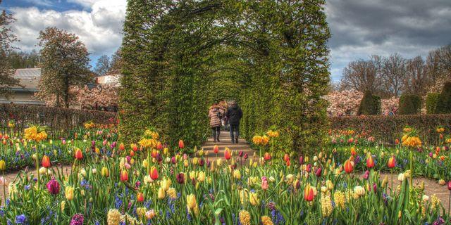 Çiçek Rotası (The Flower Route)
