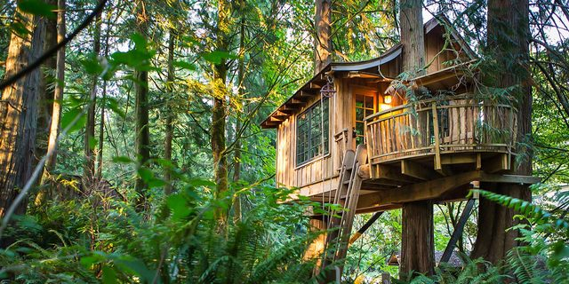 Treehouse Point Eco Resort, Washington
