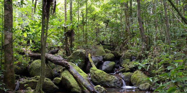 Madagaskar'ın yağmur ormanları
