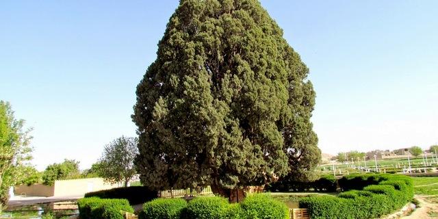 Zerdüşt Ağacı