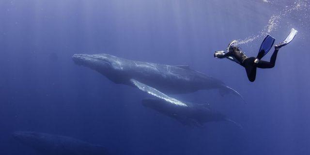 Baja kıyılarının derinliklerinde