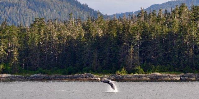 Husavik kıysından bir balina manzarası