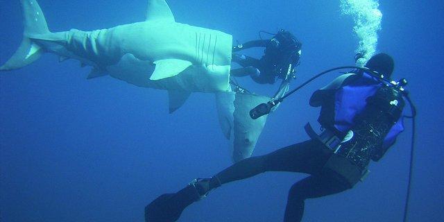 Gören gerçekten de köpek balığı zanneder