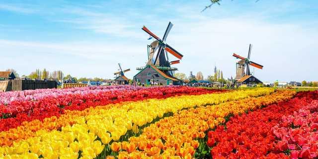 Dünyanın en renkli bahçeleri