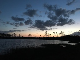 Ocala National Forest 13