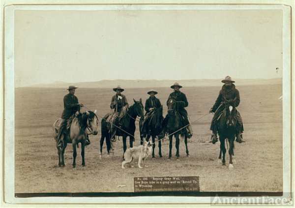 """Roping gray wolf,"" Cowboys take in a gray wolf on ""Round..."