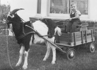 Norman Dennis Savage and his Goat Cart