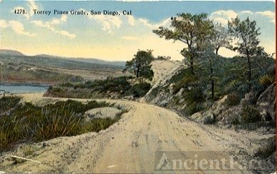 Torry Pines Road