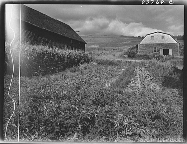 Fort Kent, Maine (vicinity). Vegetable garden on the...