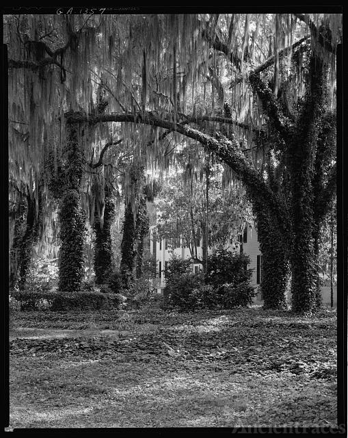 Wormsloe Plantation, Savannah vic., Chatham County, Georgia