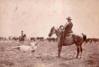Henry F. Fowler Roping Cattle