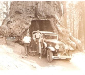 Cazneau's in Yosemite