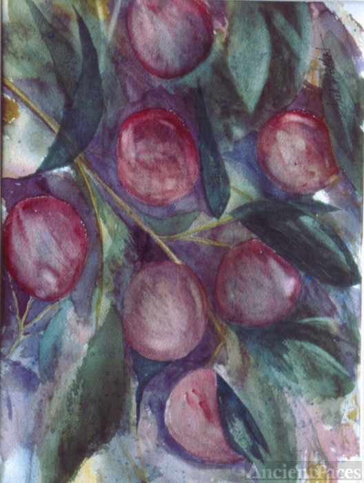 Plums - Watercolor still life by Fred Halkett