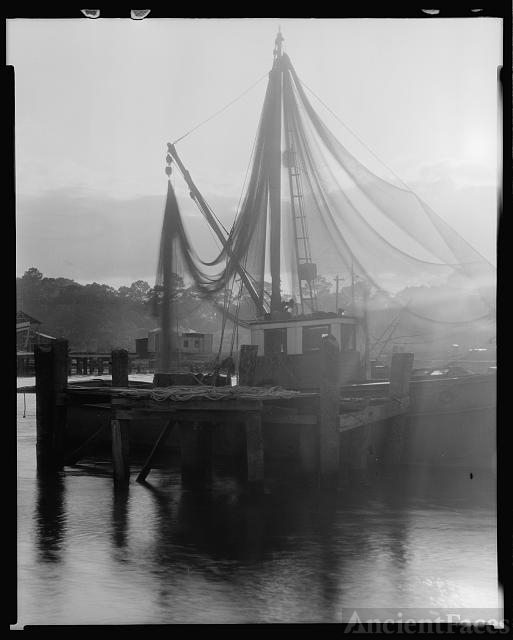 Shrimp fleet in harbor, St. Augustine, St. Johns County,...