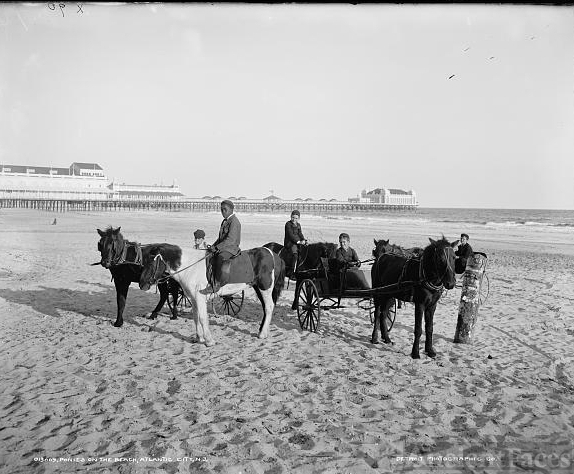 Ponies on the beach, Atlantic City, N.J.