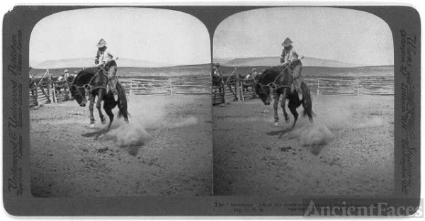 "The ""strenuous"" life of the cowboy - breaking a bucking..."