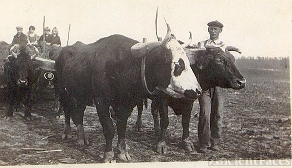 John Gordon Clay with oxen