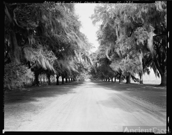 Boone Hall, avenue of trees, Mount Pleasant vic.,...