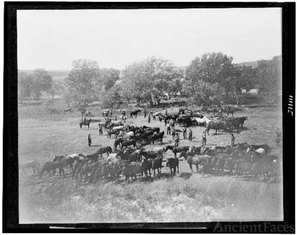 [Cowboys lassoing horses, probably in Colorado or Utah] /...
