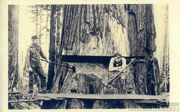 1900's Real Photo Post Card - Oregon Loggers