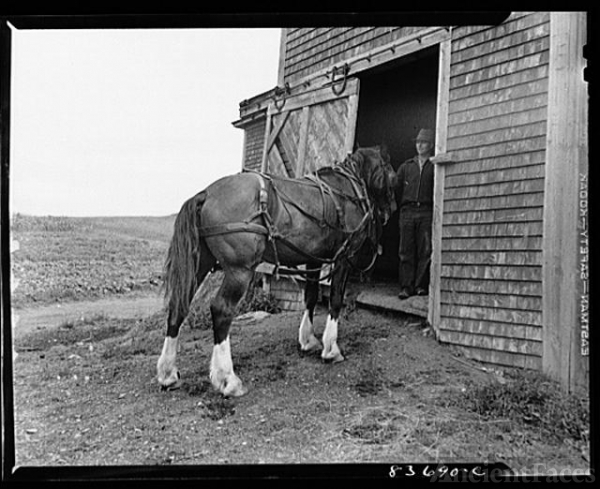 Fort Kent, Maine. (vicinity). Workhorse belonging to...