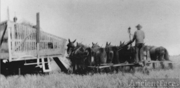 8 Hitch mule team - Header