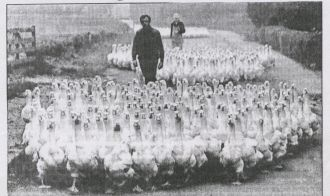 Thomas and Sarah Bruff taking Geese to Market
