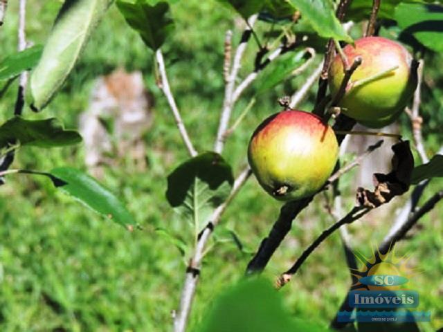 27. frutas