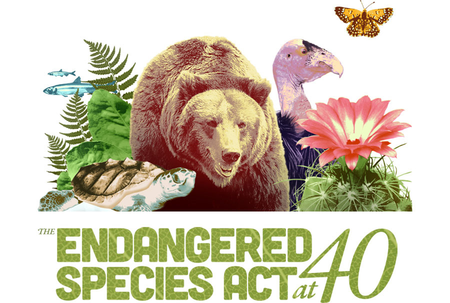 Endangered Species Logo Image From Quot Endangered Species