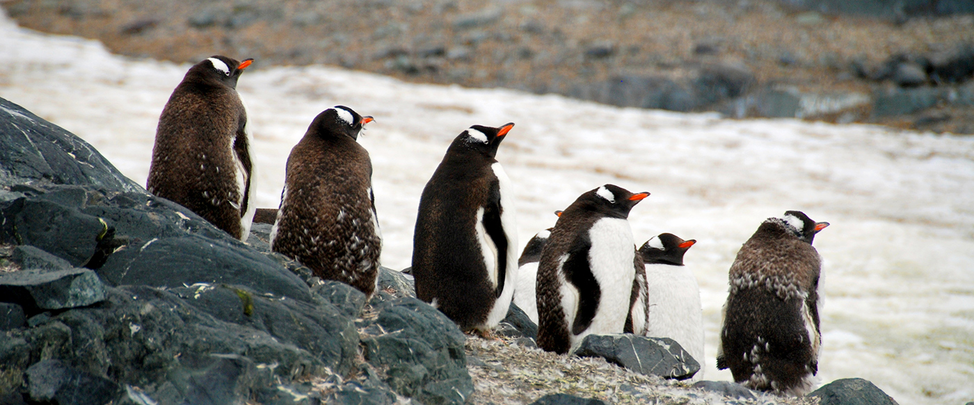 wildlife in antarctica Wildlife guide the main season for birds and other wildlife is mid-november through into mid-february (the austral summer) the antarctic peninsula and islands.