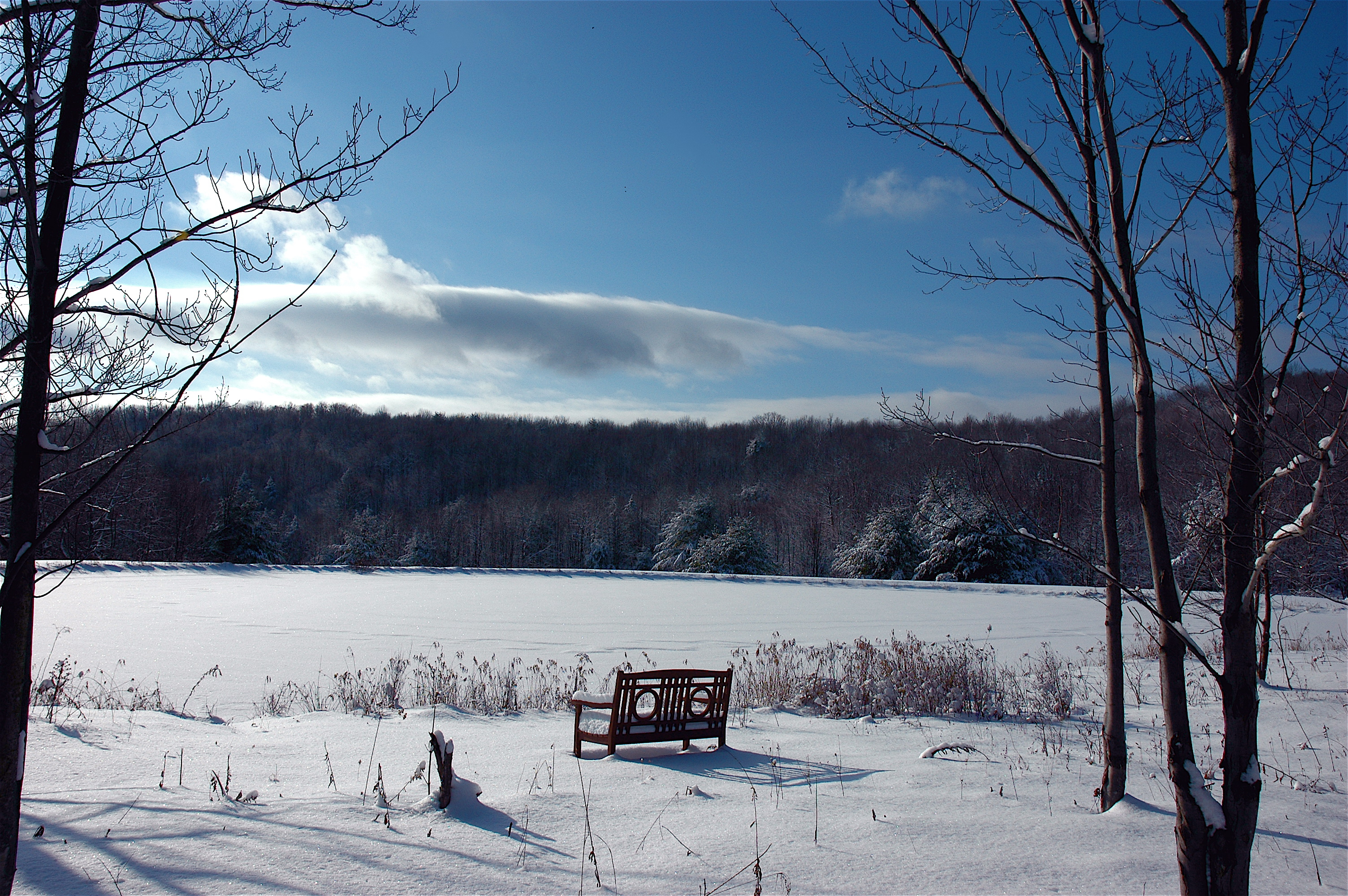 loh bench near pond during winter