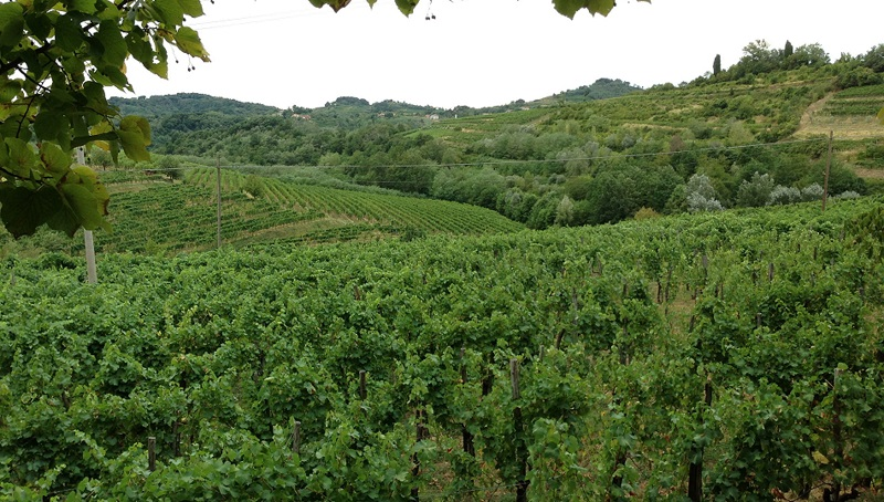 Friuli cover vinous