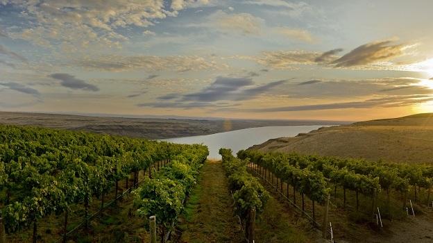 Benches vineyard vinous