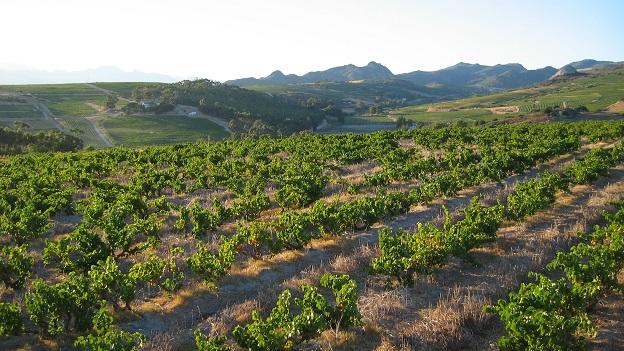Paardeberg   swartland region   vinous