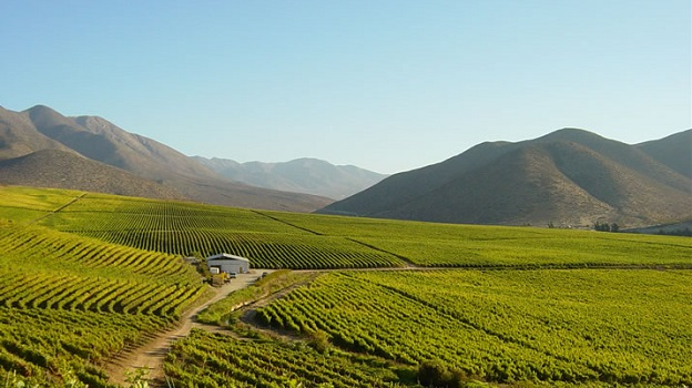 2015 chile early autum in the northern  coastal limari valley   copy