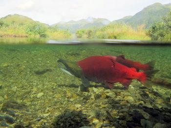 Alaska USWFWS