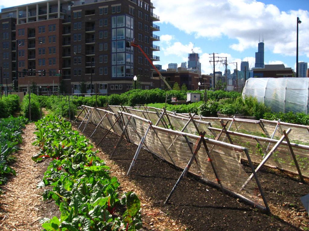 Urban garden | Wikimedia