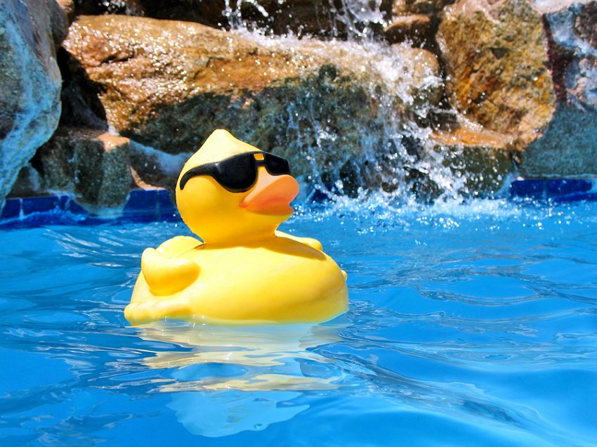 4 Ways To Keep Ducks Stay Cool In Hot Summertime