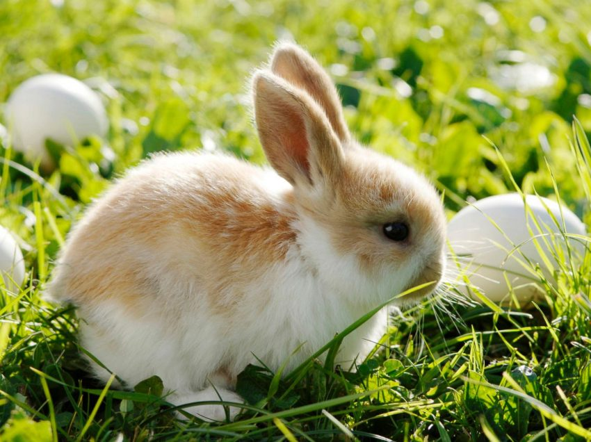 Treat Your Rabbit From Diarrhea: What Not to Do