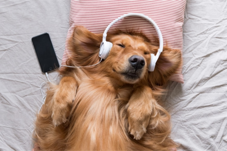 Is Music Good For Your Dog? Find All Facts Here
