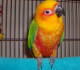 5 Disadvantages You Might Get When You Keep Parrot As Pet